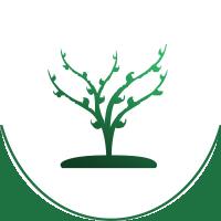 drzewo-green