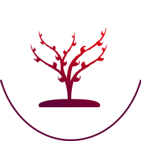 drzewo-red