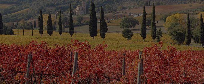 Odkryj smaki i tradycje włoskich winnic