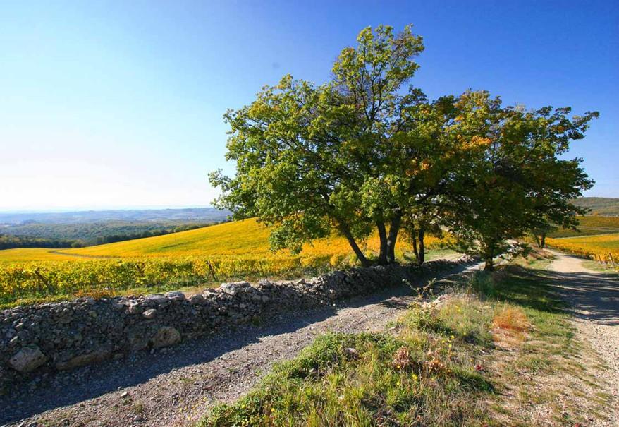 barone-ricasoli-brolio-escape-tour-picnic-02-878x605-1429717526
